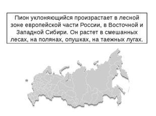 Пион уклоняющийся произрастает в лесной зоне европейской части России, в Вост