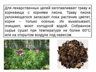 Для лекарственных целей заготавливают траву и корневища с корнями пиона. Трав