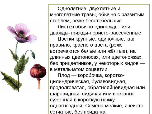 Однолетние, двухлетние и многолетние травы, обычно с развитым стеблем, реже б...