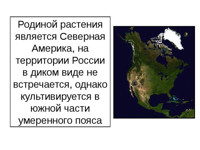 Родиной растения является Северная Америка, на территории России в диком виде...