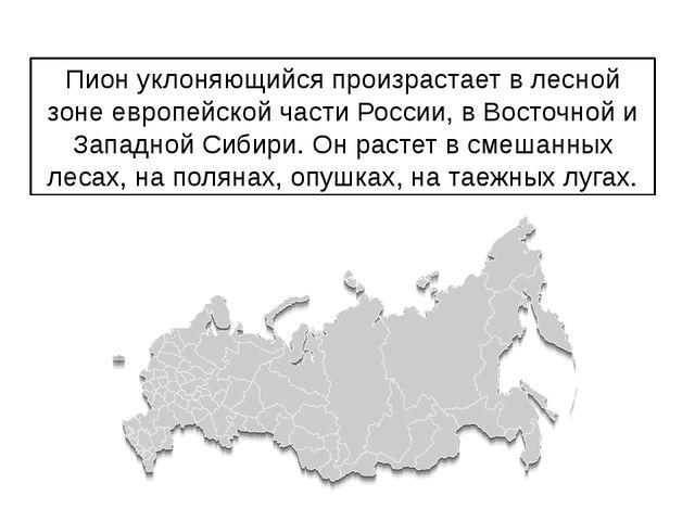 Пион уклоняющийся произрастает в лесной зоне европейской части России, в Вост...
