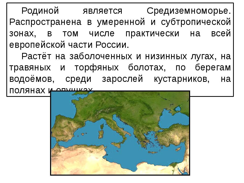 Родиной является Средиземноморье. Распространена в умеренной и субтропической...