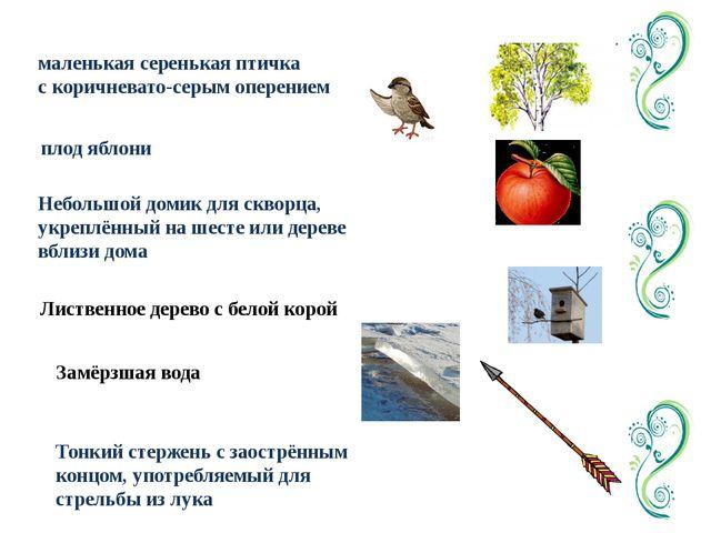 маленькая серенькая птичка с коричневато-серым оперением плод яблони Небольшо...