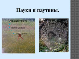 Пауки и паутины.