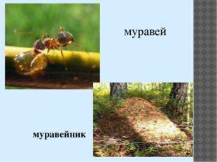 муравей муравейник