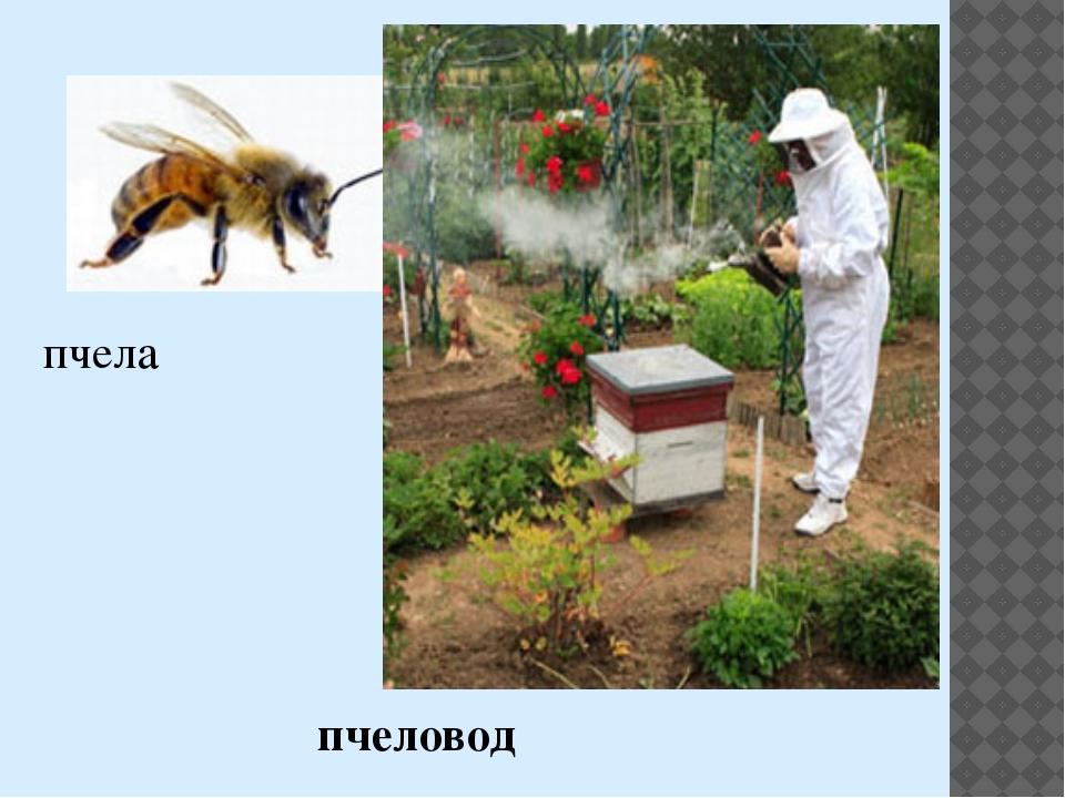 пчела пчеловод