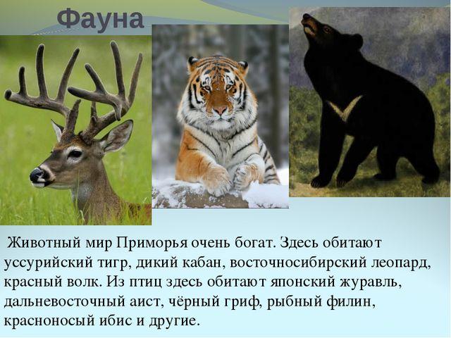 Фауна Животный мир Приморья очень богат. Здесь обитают уссурийский тигр, дики...