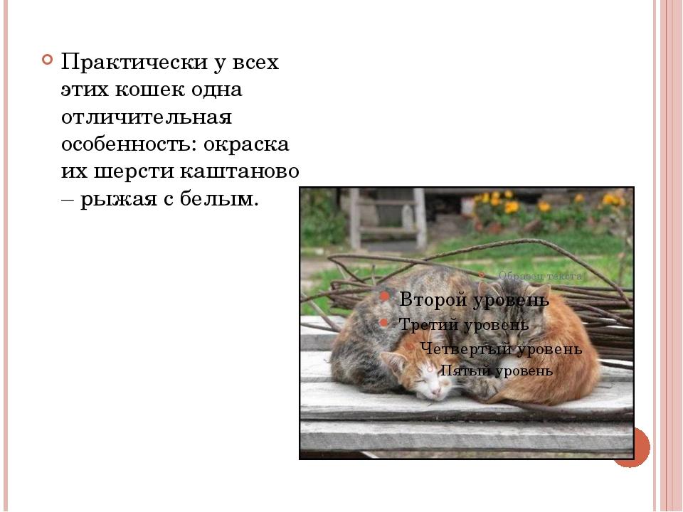 Практически у всех этих кошек одна отличительная особенность: окраска их шер...