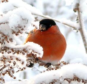 http://planetadetstva.net/wp-content/uploads/2014/06/ekologicheskaya-akciya-pokormite-ptic-zimoj.png