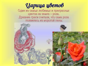 Царица цветов Один из самых любимых и прекрасных цветов на земле – роза. Древ