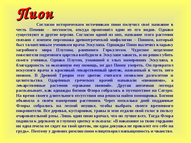 Пион Согласно историческим источникам пион получил своё название в честь Пео...