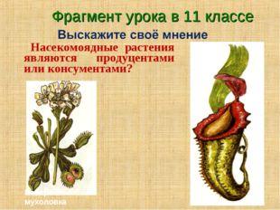 Насекомоядные растения являются продуцентами или консументами? Венерина мухо