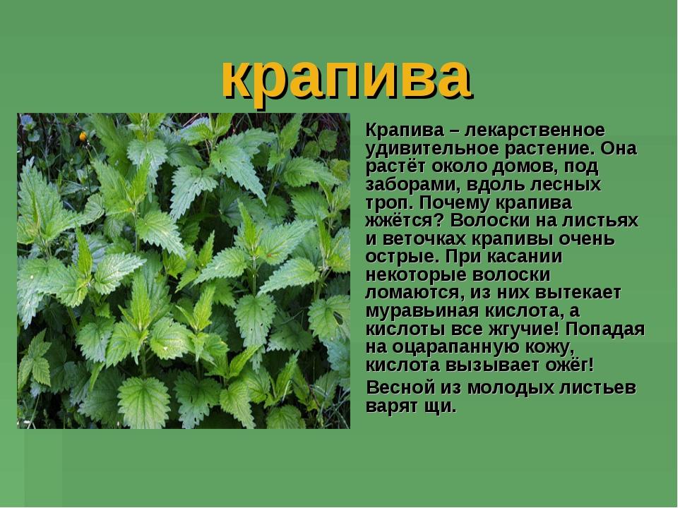 https://ds02.infourok.ru/uploads/ex/11ba/0002bd51-b4bc20a9/img9.jpg