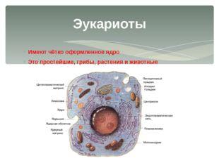 Имеют чётко оформленное ядро Это простейшие, грибы, растения и животные Эукар