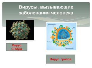 Вирусы, вызывающие заболевания человека Вирус СПИДа Вирус гриппа