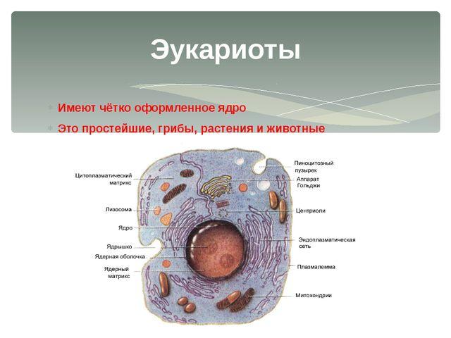 Имеют чётко оформленное ядро Это простейшие, грибы, растения и животные Эукар...