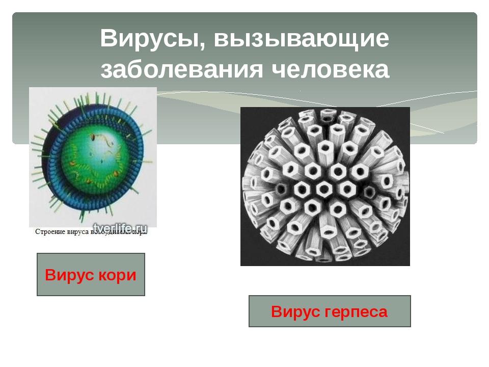 Вирусы, вызывающие заболевания человека Вирус кори Вирус герпеса