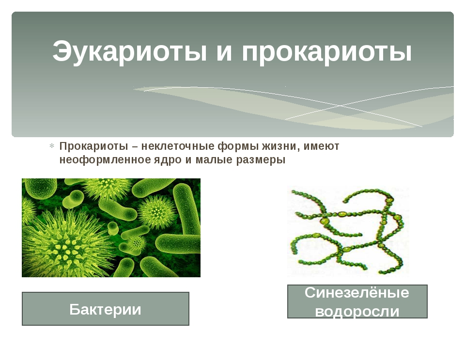 Прокариоты – неклеточные формы жизни, имеют неоформленное ядро и малые размер...