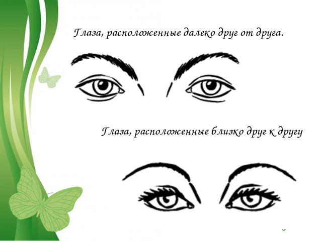 Глаза, расположенные далеко друг от друга. Глаза, расположенные близко друг к...