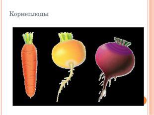 Корнеплоды Корнеплоды представляют собой видоизменения главных корней, выпол