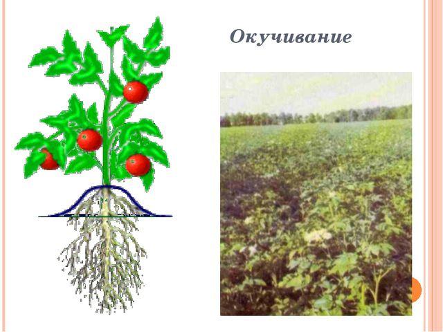 Окучивание Кстати! Способность многих растений образовывать придаточные корни...