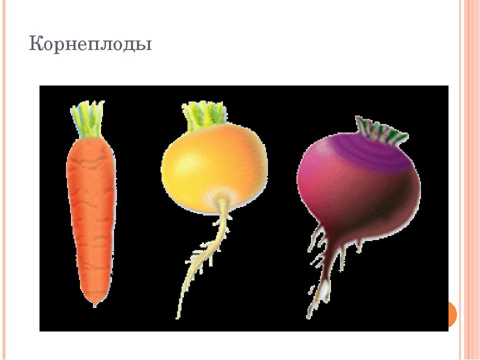 Корнеплоды Корнеплоды представляют собой видоизменения главных корней, выпол...