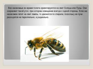 Все насекомые во время полета ориентируются на свет Солнца или Луны. Они сох
