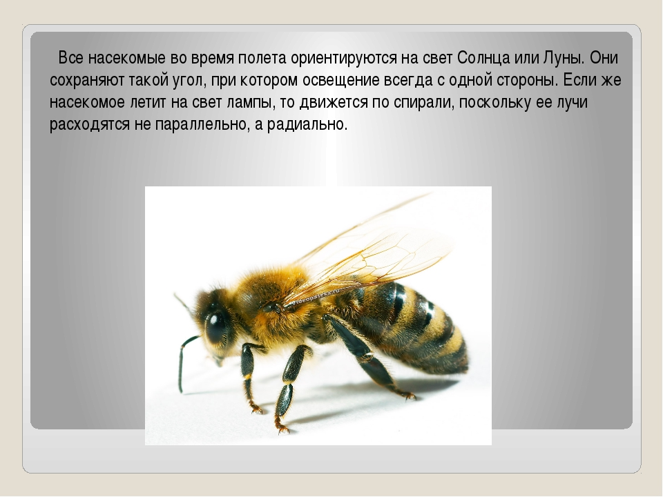 Все насекомые во время полета ориентируются на свет Солнца или Луны. Они сох...