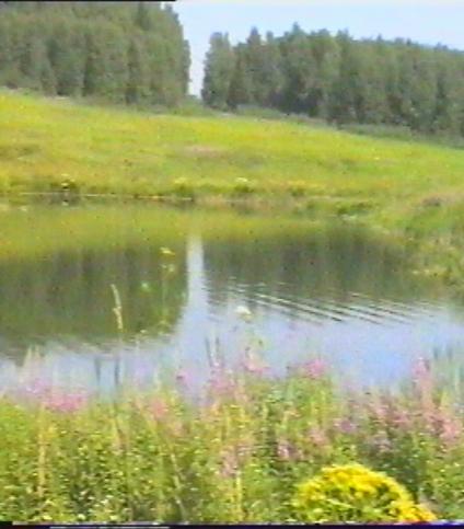 Малиновый хутор 3