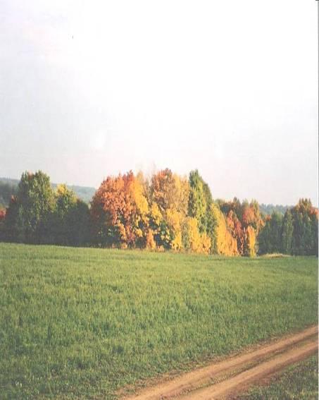 Малиновый хутор1