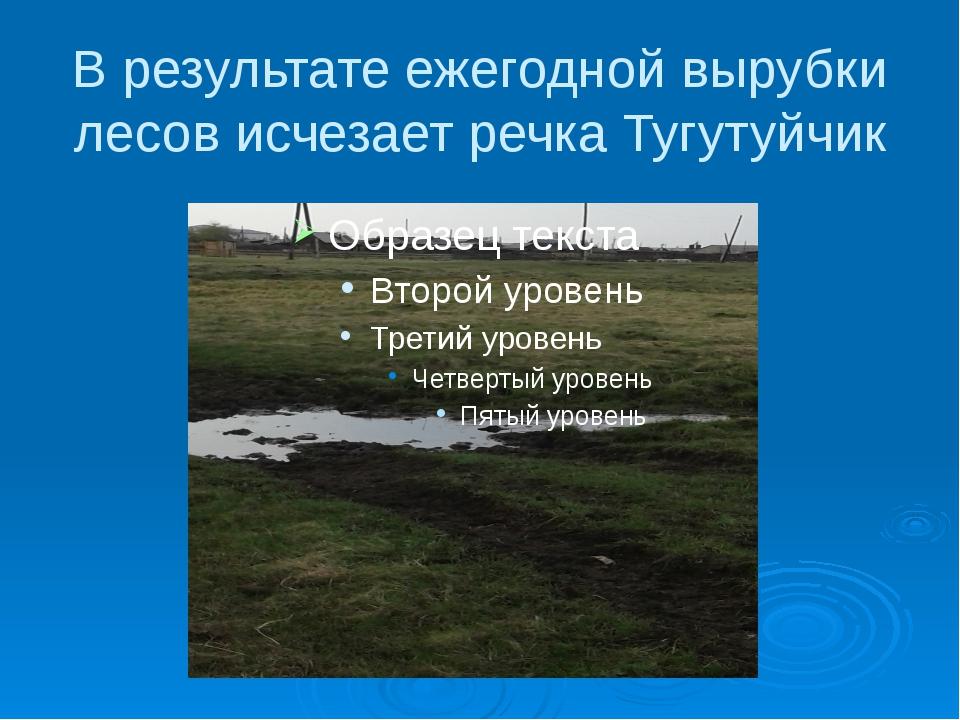В результате ежегодной вырубки лесов исчезает речка Тугутуйчик