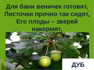 Для бани веничек готовят, Листочки прочно так сидят, Его плоды – зверей накор