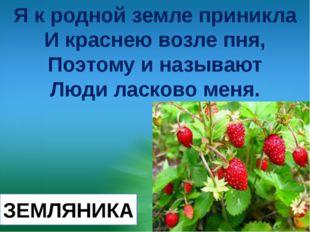 Я к родной земле приникла И краснею возле пня, Поэтому и называют Люди ласков