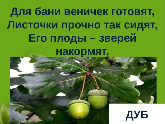 Для бани веничек готовят, Листочки прочно так сидят, Его плоды – зверей накор...
