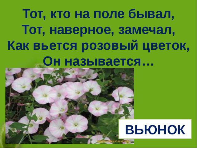 Тот, кто на поле бывал, Тот, наверное, замечал, Как вьется розовый цветок, Он...