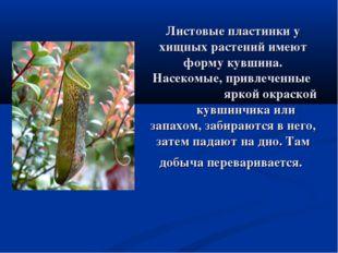 Листовые пластинки у хищных растений имеют форму кувшина. Насекомые, привлече