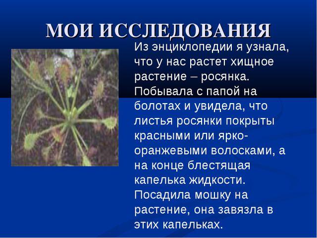 МОИ ИССЛЕДОВАНИЯ Из энциклопедии я узнала, что у нас растет хищное растение –...