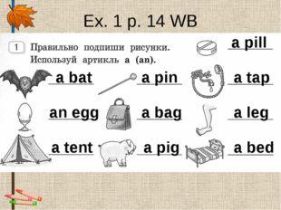 Ex. 1 p. 14 WB a bat an egg a tent a pin a bag a pig a pill a tap a leg a bed
