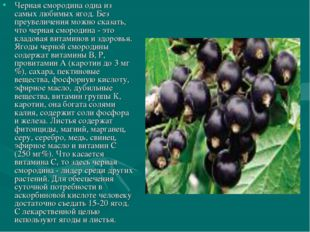 Черная смородина одна из самых любимых ягод. Без преувеличения можно сказать,