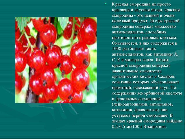 Красная смородина не просто красивая и вкусная ягода, красная смородина - это...