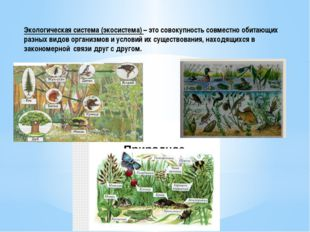 Экологическая система (экосистема) – это совокупность совместно обитающих раз