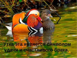 Утка эта является символом удачи и счастливого брака,