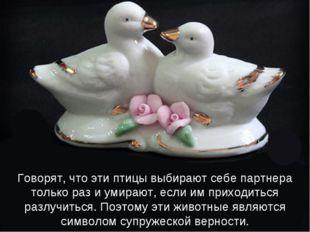 Говорят, что эти птицы выбирают себе партнера только раз и умирают, если им