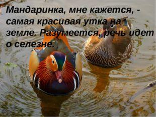 Мандаринка, мне кажется, - самая красивая утка на земле. Разумеется, речь иде