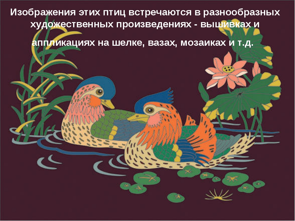 Изображения этих птиц встречаются в разнообразных художественных произведения...