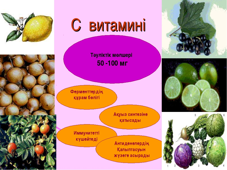 С витамині Тәуліктік мөлшері 50 -100 мг Ферменттердің құрам бөлігі Ақуыз синт...