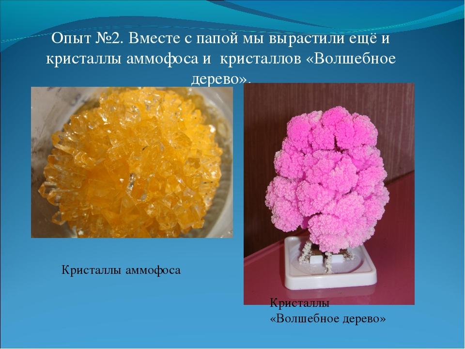 Опыт №2. Вместе с папой мы вырастили ещё и кристаллы аммофоса и кристаллов «В...