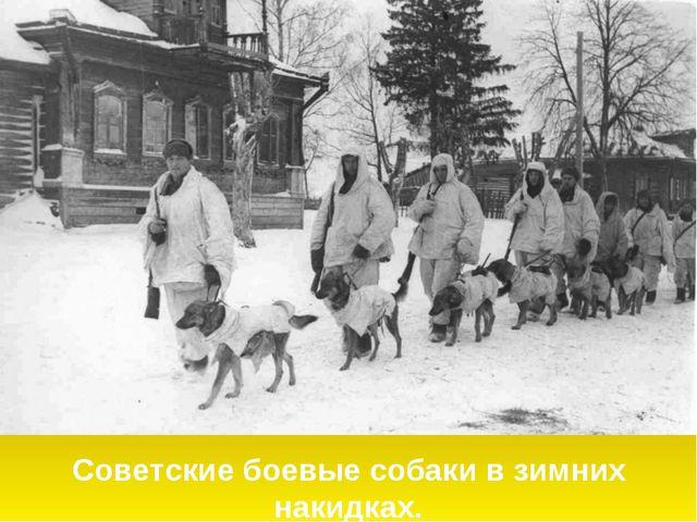 Советские боевые собаки в зимних накидках.