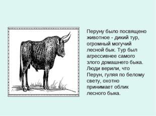 Перуну было посвящено животное - дикий тур, огромный могучий лесной бык. Тур