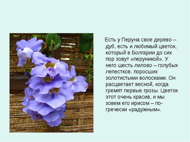 Есть у Перуна свое дерево – дуб, есть и любимый цветок, который в Болгарии д...